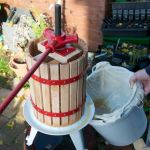 Cider press in use