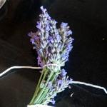 Lavender 'bouquet garni'