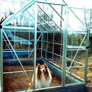 Dave, showing off his new greenhouse!
