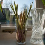 The lemongrass stems