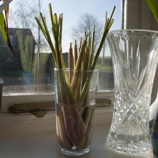 The lemongrass stems