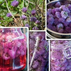 Chive flower vinegar