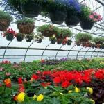 Nursery Polytunnel