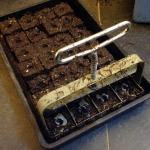 Making up soil blocks in seed tray