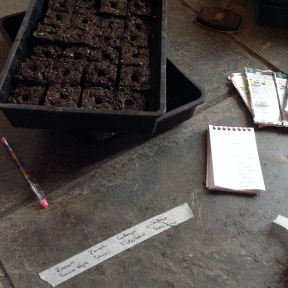 Sowing seeds into soil blocks
