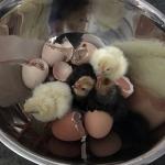 eggscapade-3_5