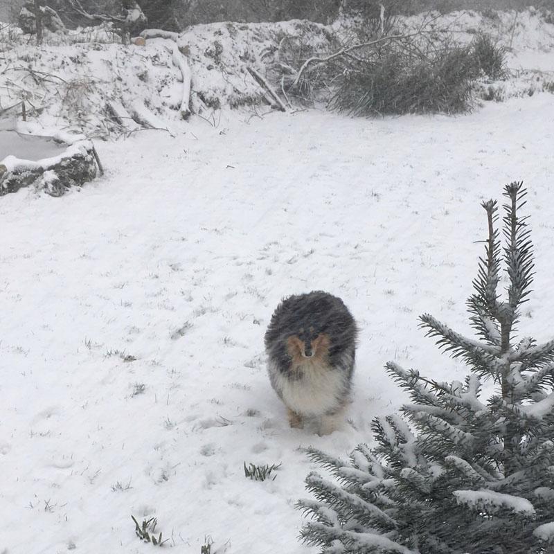 Rosheen in snowstorm