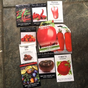 Tomato and chilli seeds